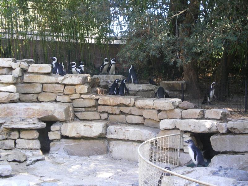 Zoo de la Palmyre Imgp0512