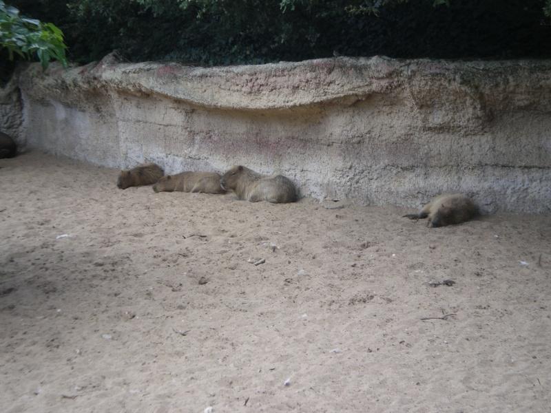 Zoo de la Palmyre Imgp0513
