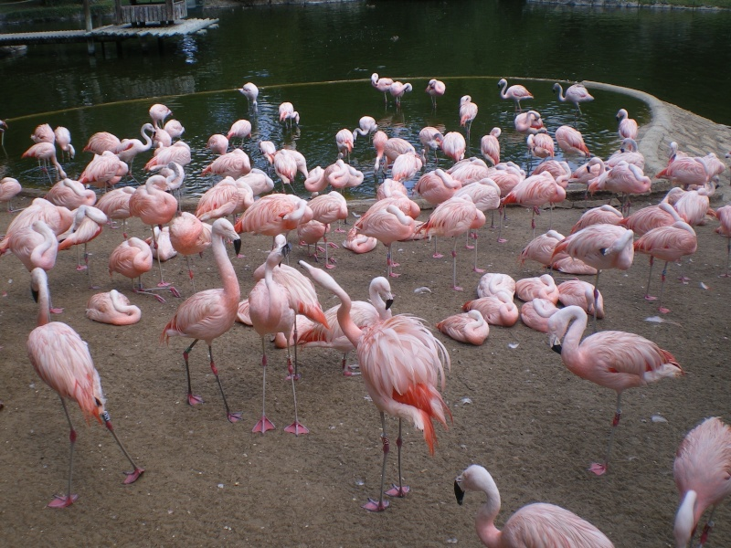 Zoo de la Palmyre Imgp0514