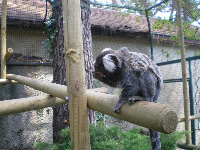 Zoo de la Palmyre Imgp0517