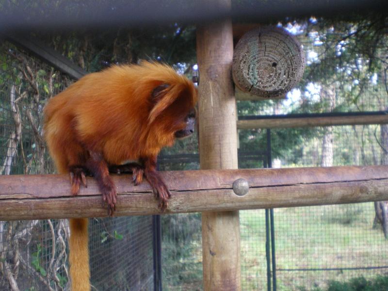 Zoo de la Palmyre Imgp0518