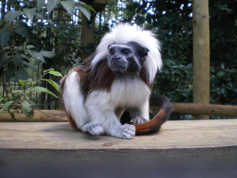 Zoo de la Palmyre Imgp0519