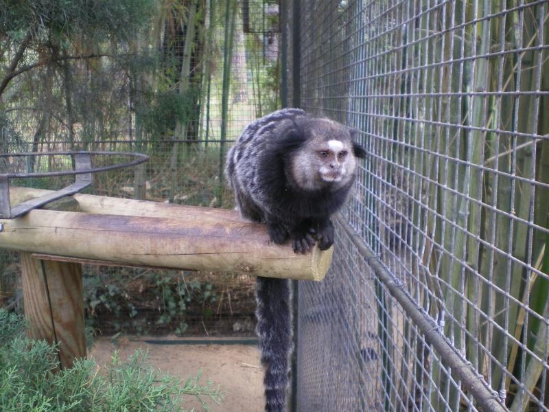Zoo de la Palmyre Imgp0520