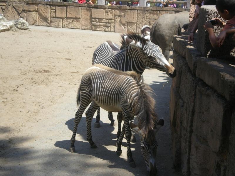 Zoo de la Palmyre Imgp0521