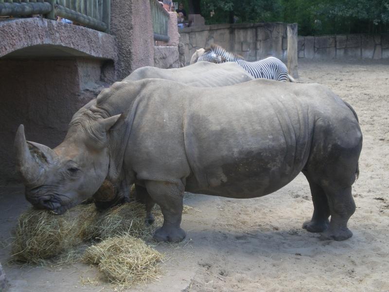 Zoo de la Palmyre Imgp0522