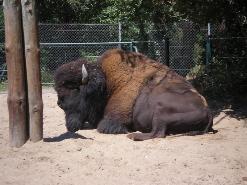 Zoo de la Palmyre Imgp0523