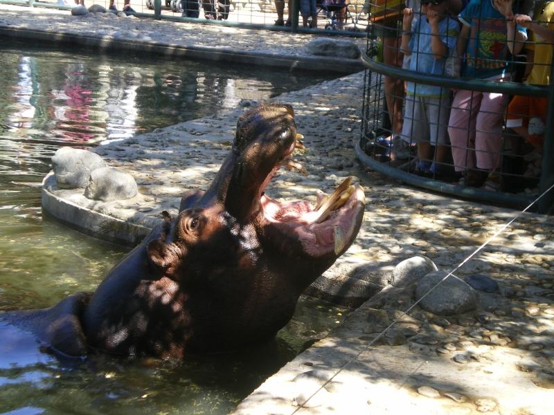 Zoo de la Palmyre Imgp0524