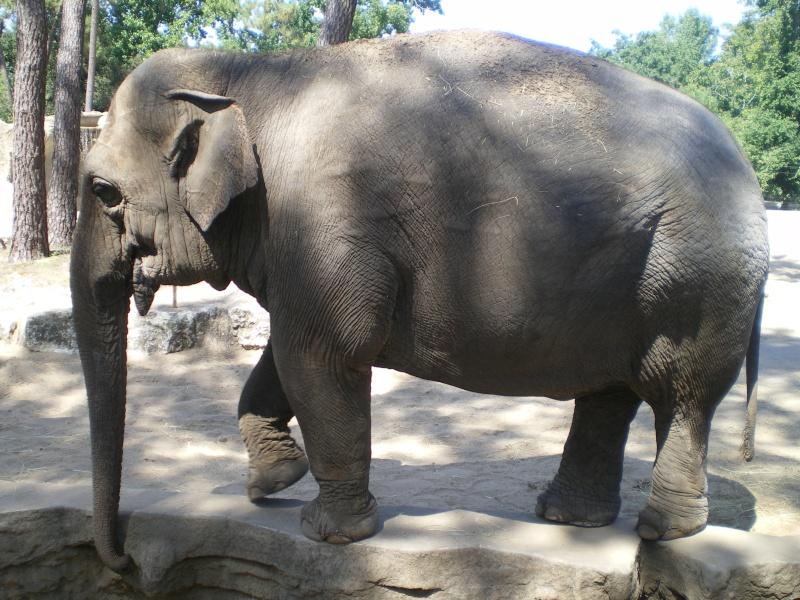 Zoo de la Palmyre Imgp0525