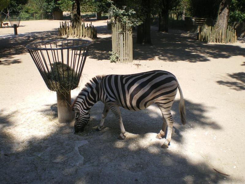 Zoo de la Palmyre Imgp0526