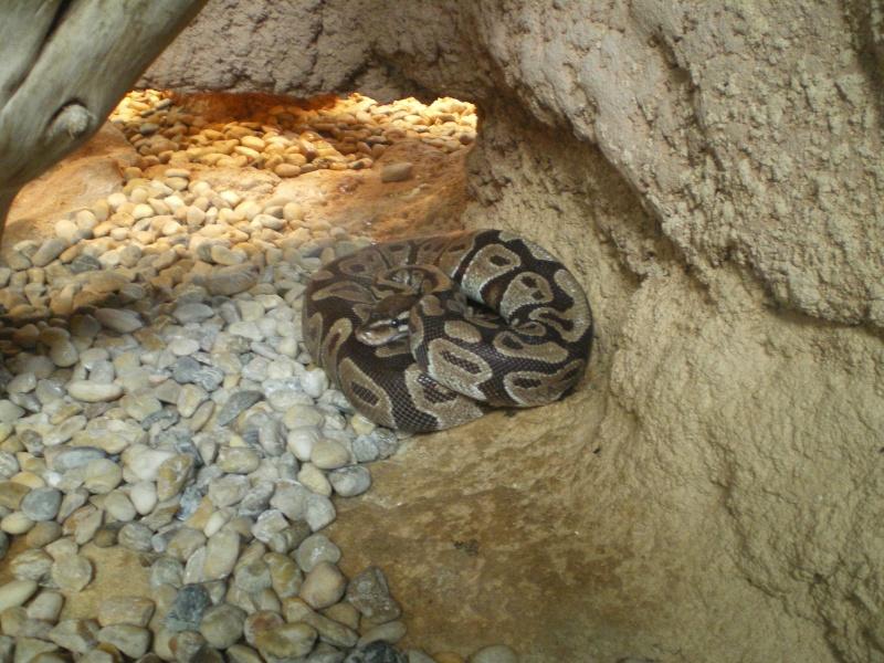 Zoo de la Palmyre Imgp0529