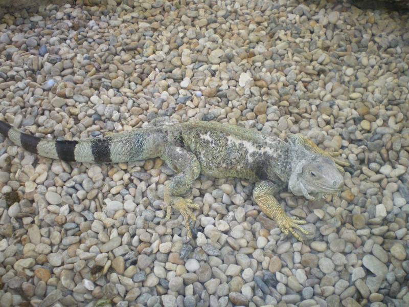 Zoo de la Palmyre Imgp0610