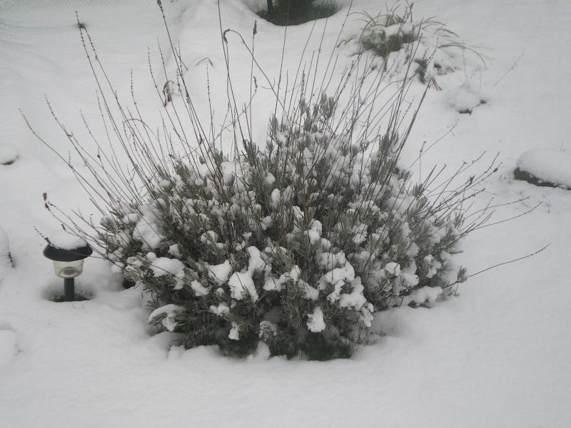 neige dans l'oise Imgp2335