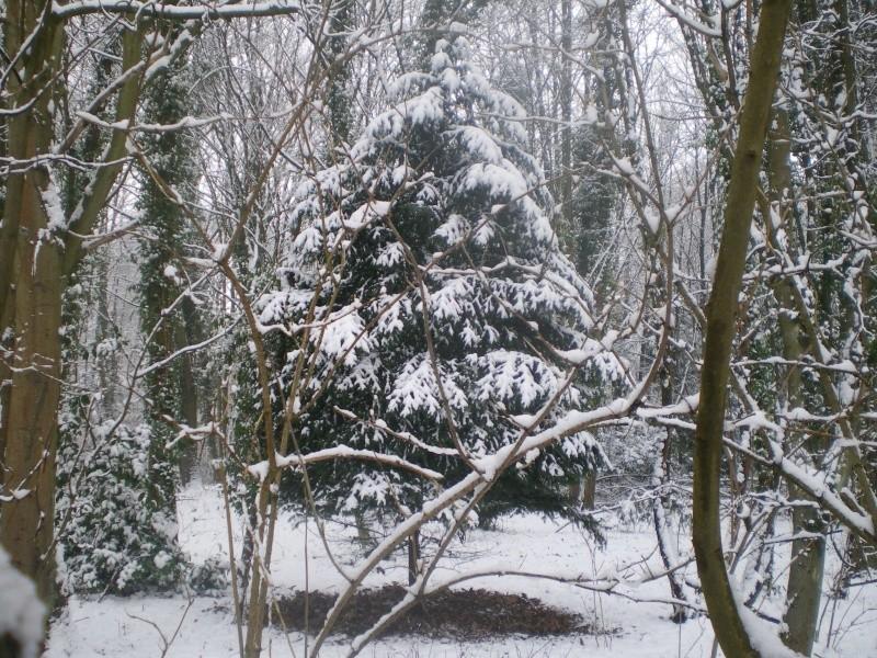 neige dans l'oise Imgp2336