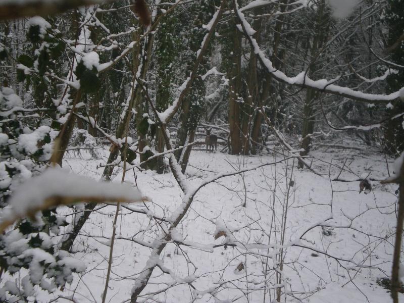 neige dans l'oise Imgp2340