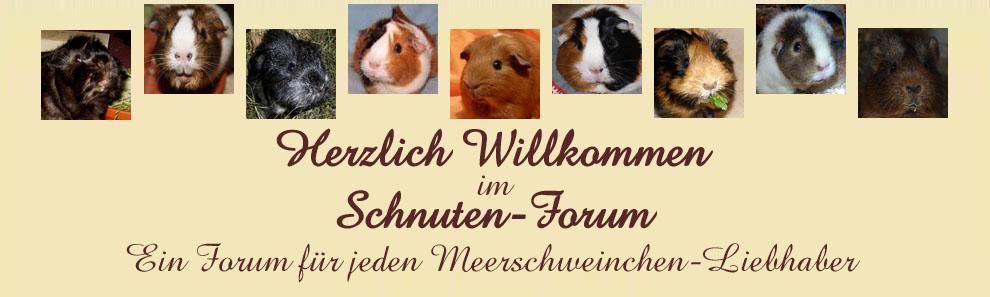 Meerschweinchen-Liebhaber-Forum