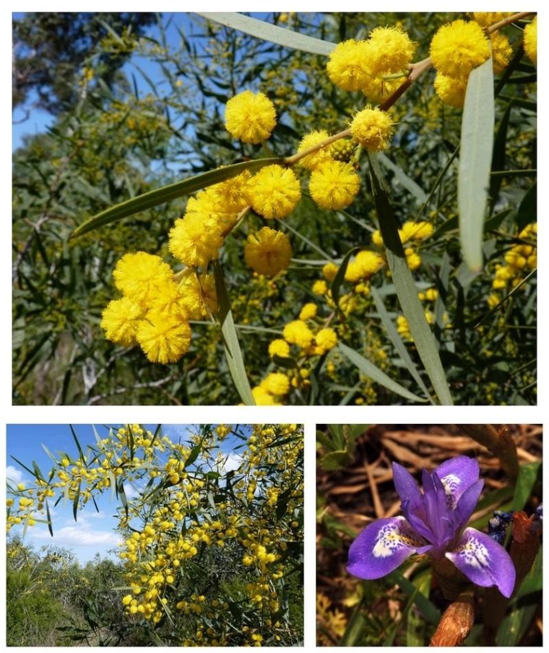 Chypre 2013 4- autres orchidées hors Ophrys et Serapias 10_11_10
