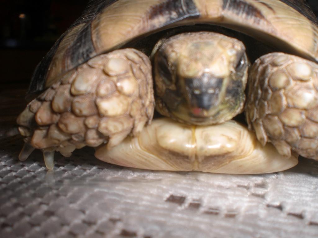 Identification de cette tortue Cimg0110