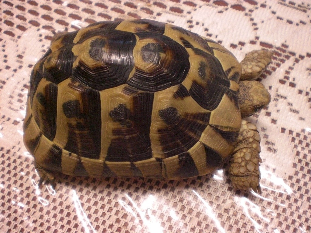 Identification de cette tortue Cimg0113