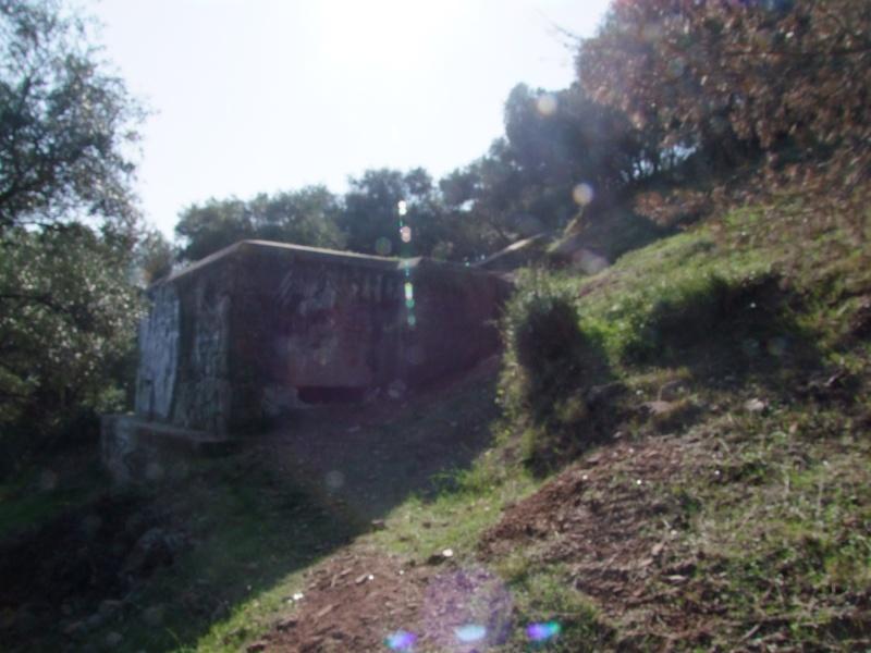 Colline de Costebelle - Hyères (83) Dscf0312
