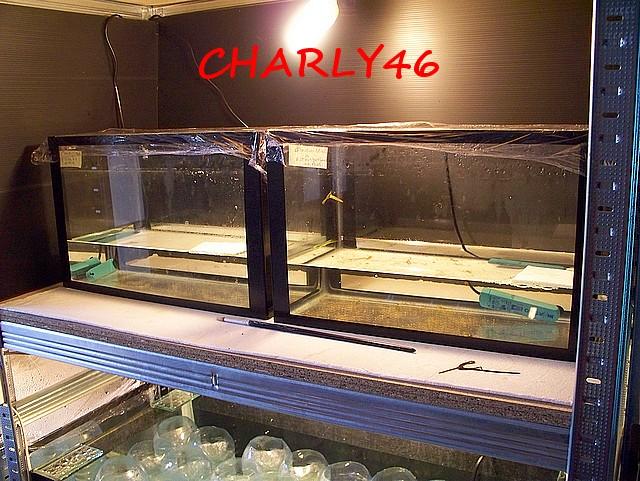 """Charly46: """"Conduite d'élevage"""" Autres73"""