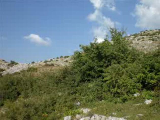 Foto peisazhe nga Natyra e Gurit Bardhë 2510