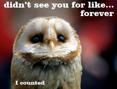 Rentrée et autres problèmes. :D Owl10