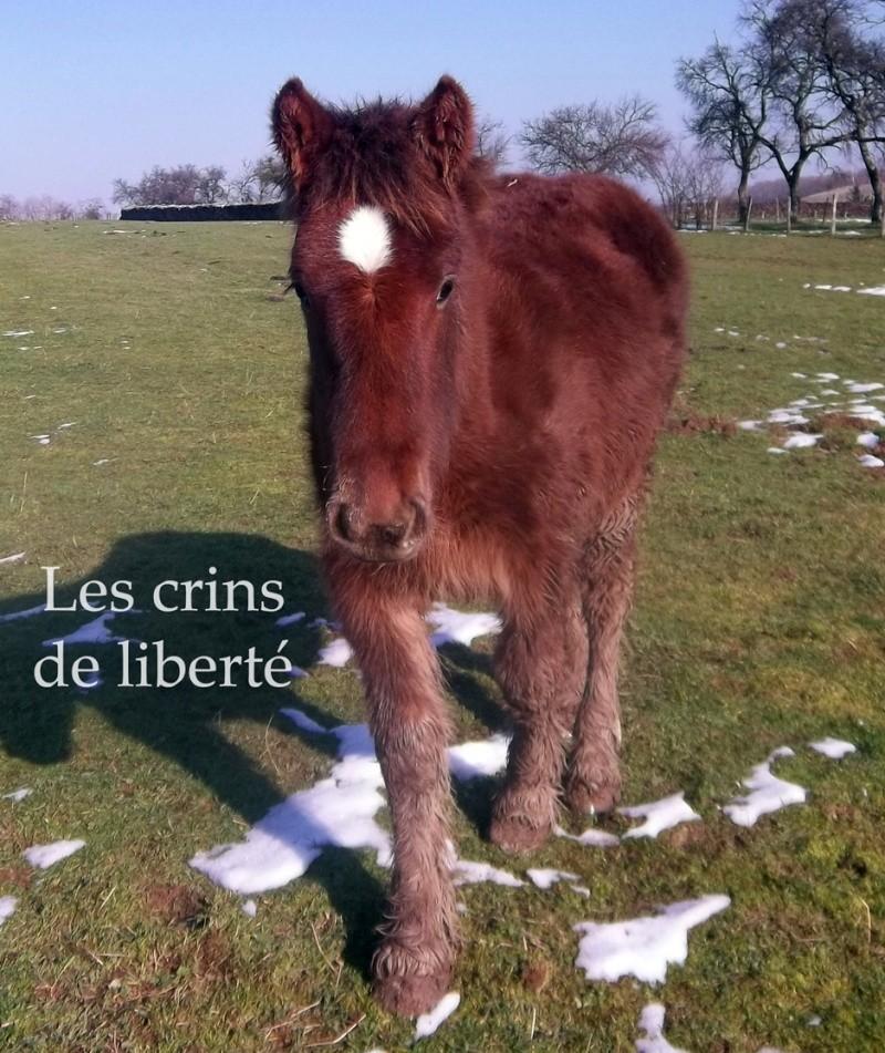 Dpt 70 - Cidjy de la Fontaine - ONC Comtoise - Sauvée par elise-et-delice (Mars 2013) - Page 2 Cidjy_10
