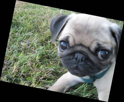 quand les gens confonde vos chiens avec une autre race!!! Image510