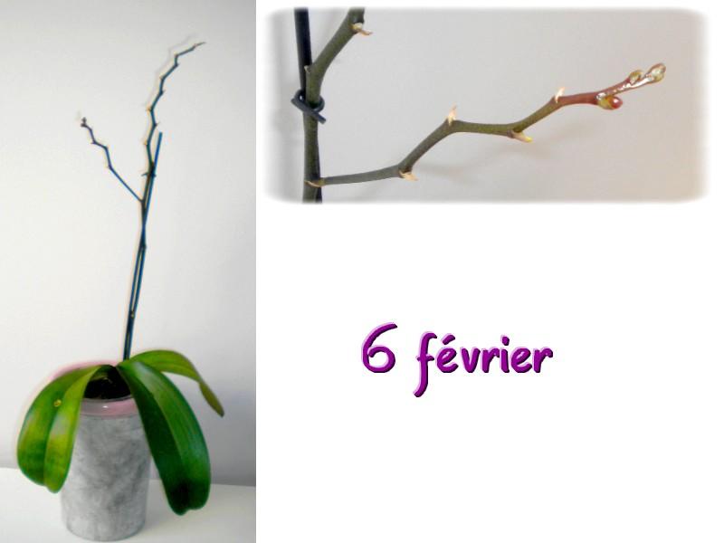 orchidée en bonne santé ou pas? 6_fev210