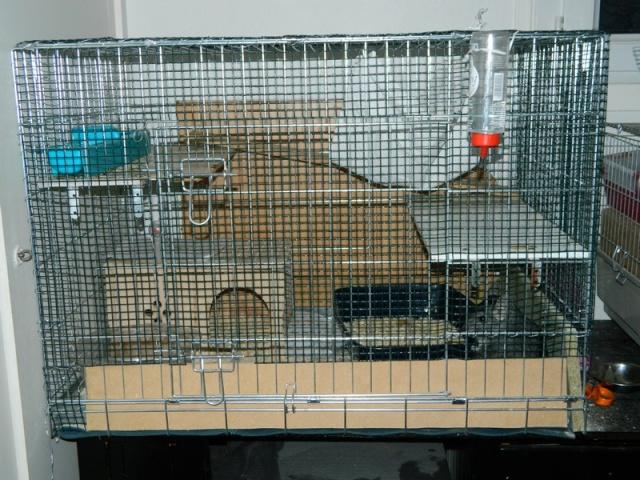la cage d'oscar Dscn0710