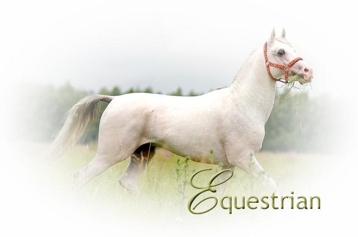 Equestrian Logo11