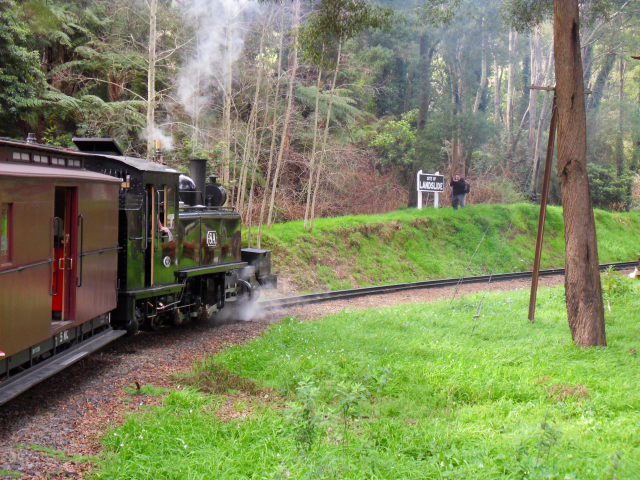 Puffing Billy Puffin11