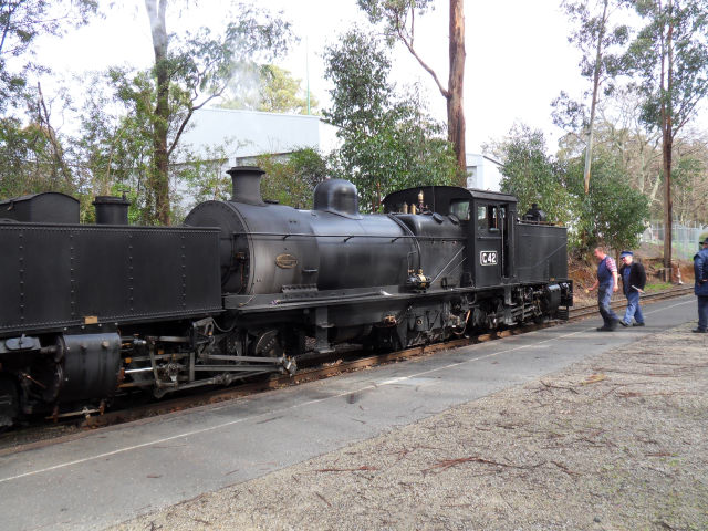 Puffing Billy Puffin12