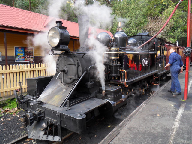 Puffing Billy Puffin13