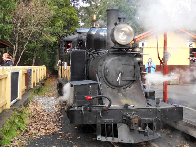 Puffing Billy Puffin14