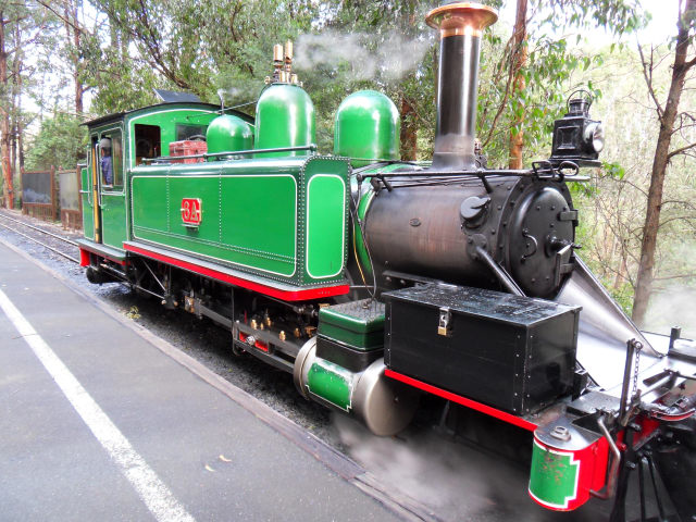 Puffing Billy Puffin15