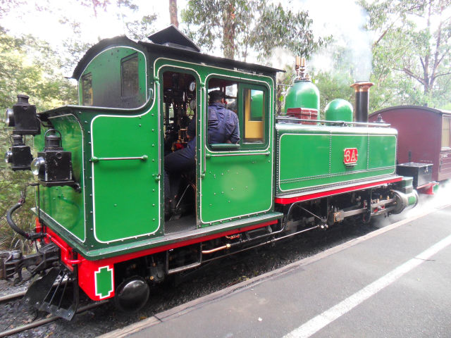 Puffing Billy Puffin16