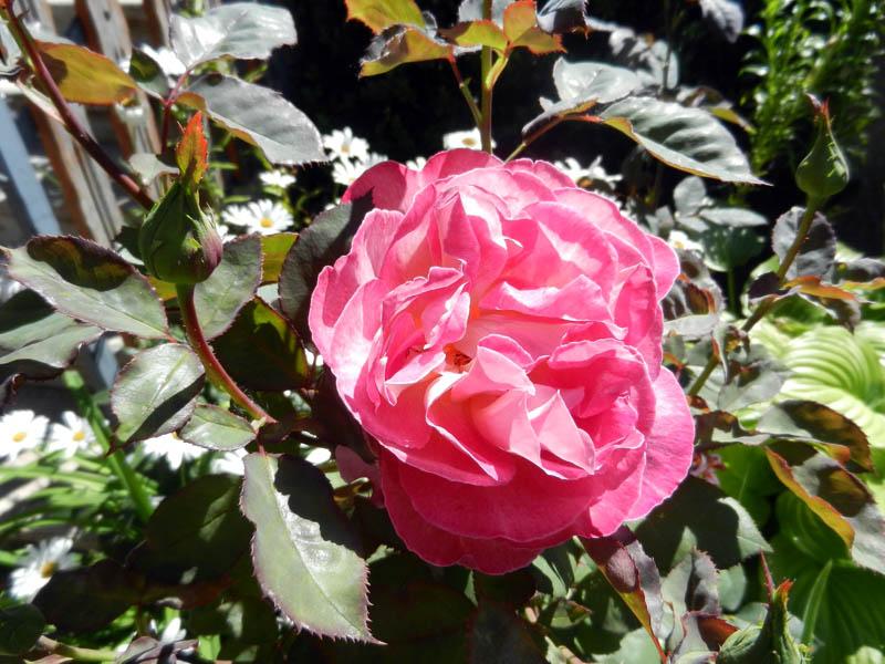 Photos de nos jardins 2013-411