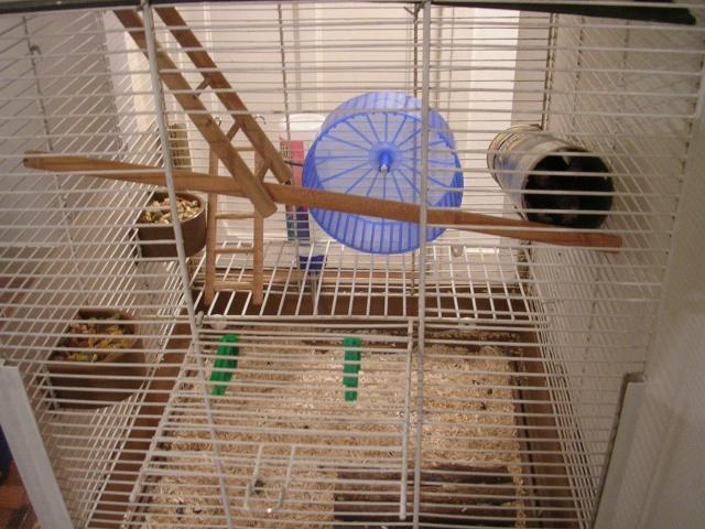 Photos de vos cages Dscn3510