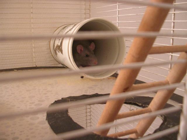 Photos de vos cages Dscn3612