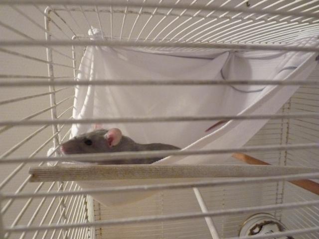 Photos de vos cages P1010410