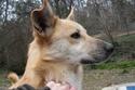 Helisa, x berger des shetland, née 2010 - Tabanac 33 Cimg1511