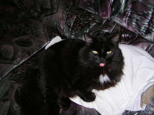 Mischief, le plus vieux chat du monde ? Pictur10