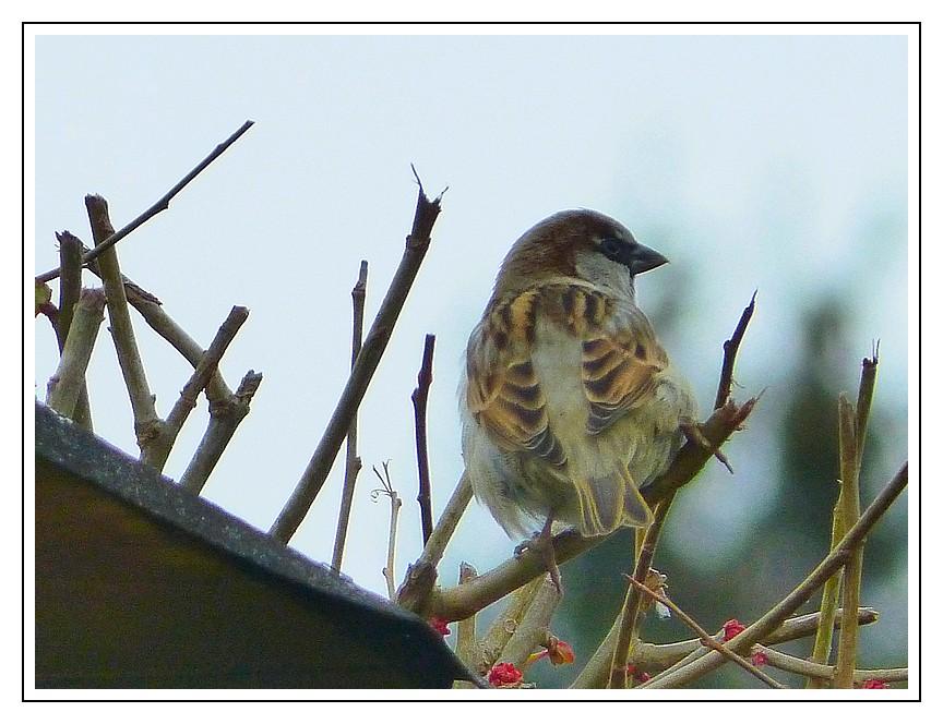 A. Une histoire d'oiseau P1210413