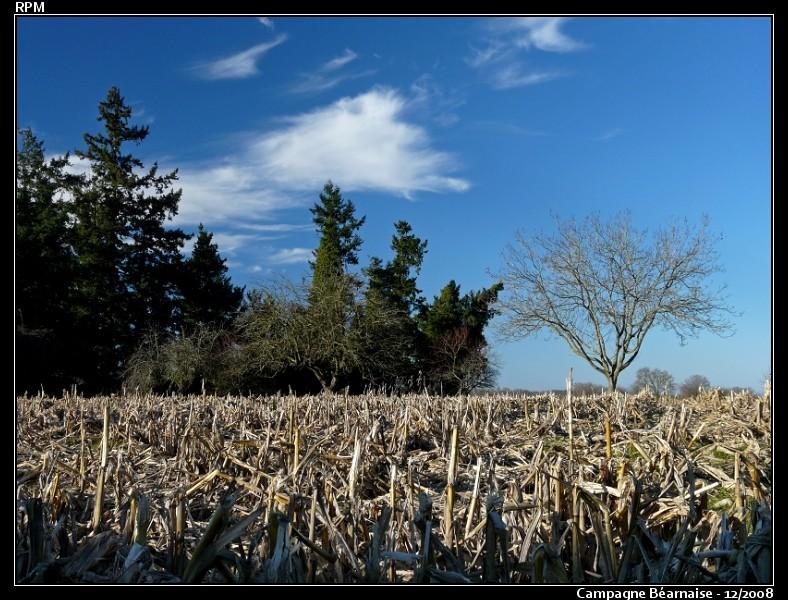 Petite balade dans la campagne Béarnaise ... P1060215