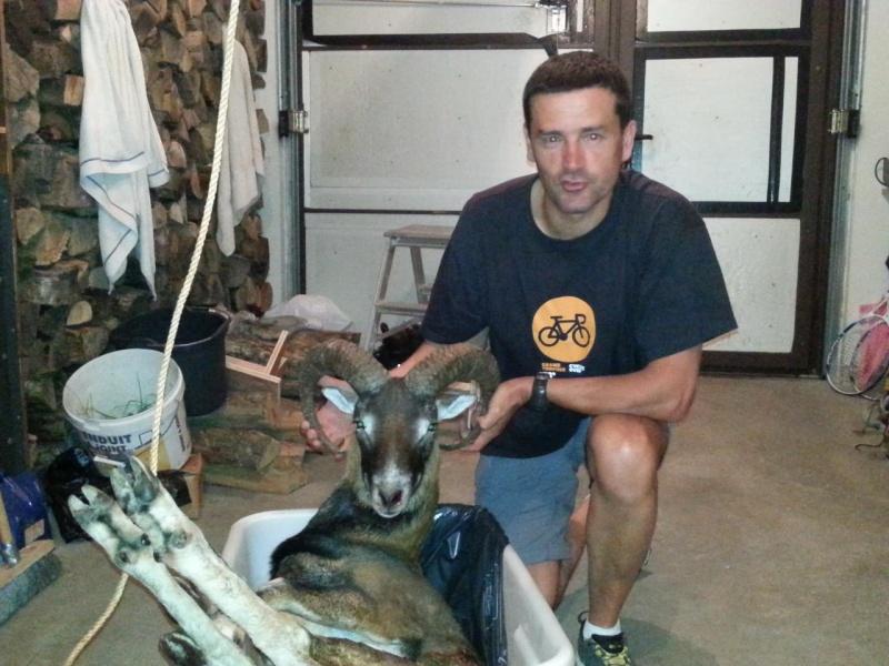 chasse mouflon 3-811