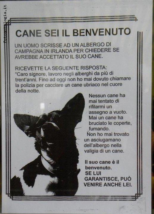 Benvenuto al cane e al gatto Cane10