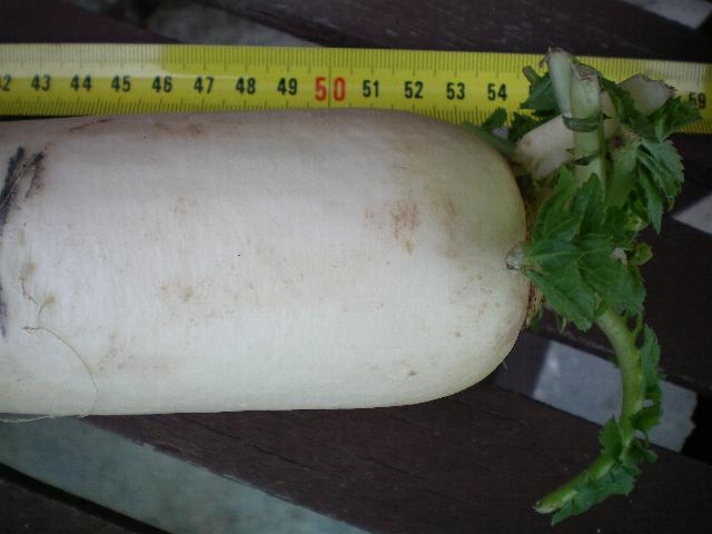 rapa bianca Paerti10