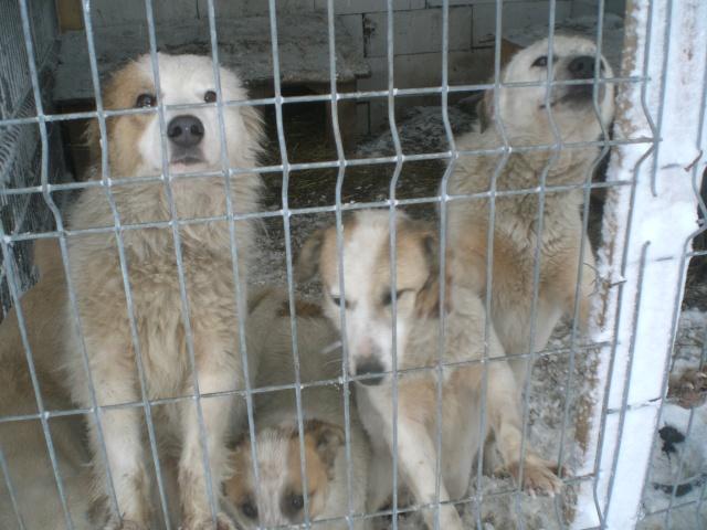 fata - FATA, née le 12/06/2009, arrivée chiot au refuge (soeur de Mickey et fille de Tara) - en FA dans le 49 - GARANT - SOS -R-FB-SC-30MA Cimg3013