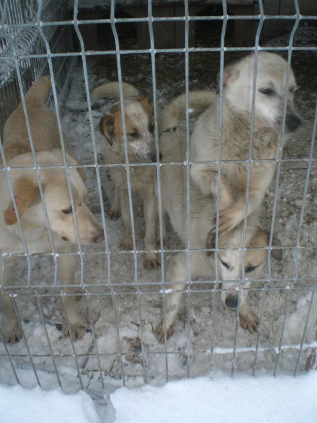 fata - FATA, née le 12/06/2009, arrivée chiot au refuge (soeur de Mickey et fille de Tara) - en FA dans le 49 - GARANT - SOS -R-FB-SC-30MA Cimg3014